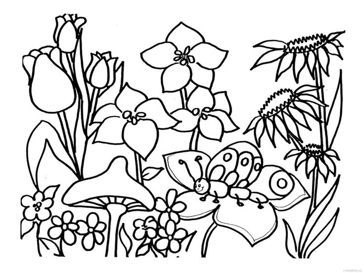 coloring2.jpg (1618×1214)