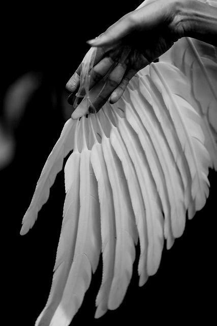 aile déployée...