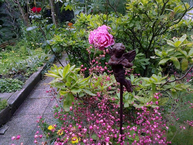 Quelle plante au pied d'un rosier? Rosier, Palette