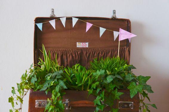 Valise terrarium. Recyclée comme jardinière pour ses plantes.