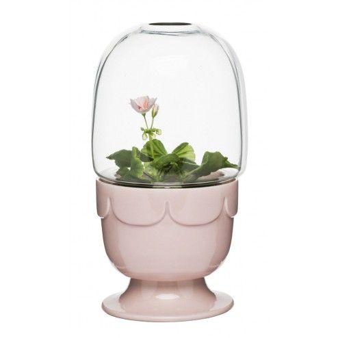 Mini - Serre avec couvercle et support - Rose pâle