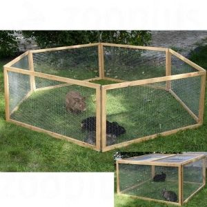 A rabbit pin like this but larger and with taller walls that are covered on top with chicken wire to keep hawks away. Probably with a door somewhere to get in