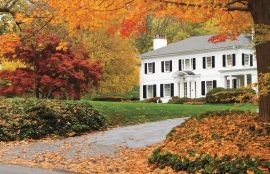 Trees and Shrubs for Fall Color