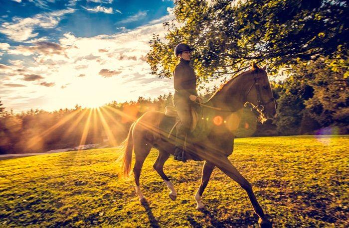 11 anledningar för alla gamla hästtjejer att börja rida igen