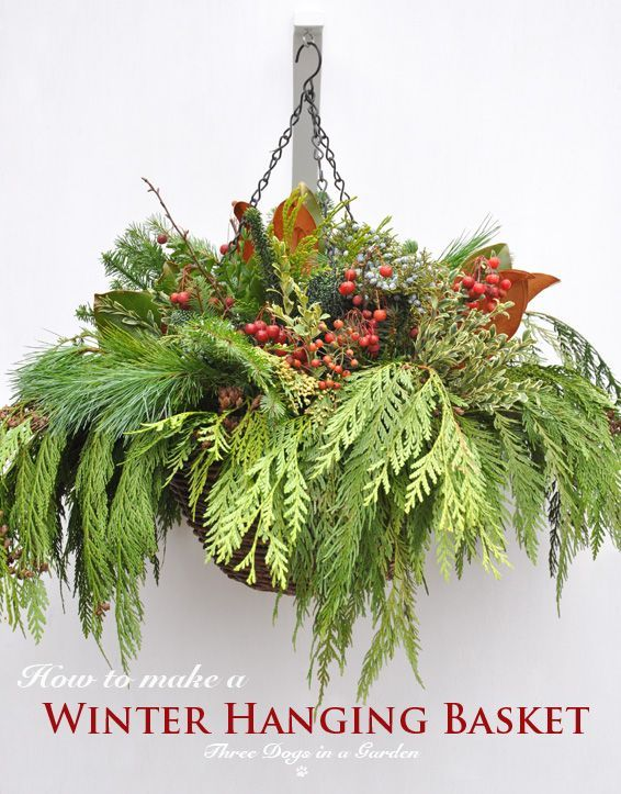 Three Dogs in a Garden: How to make a Winter Hanging Basket