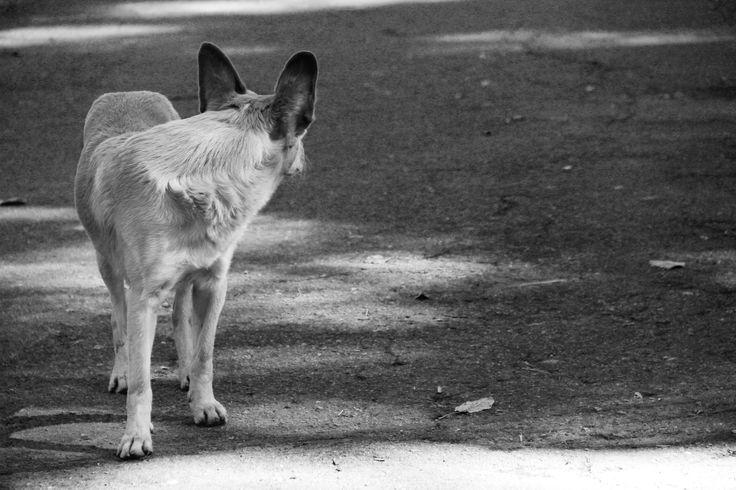 DOG, CÃO, CACHORRO, luz, perro, lonely, só, way, pb, preto e branco