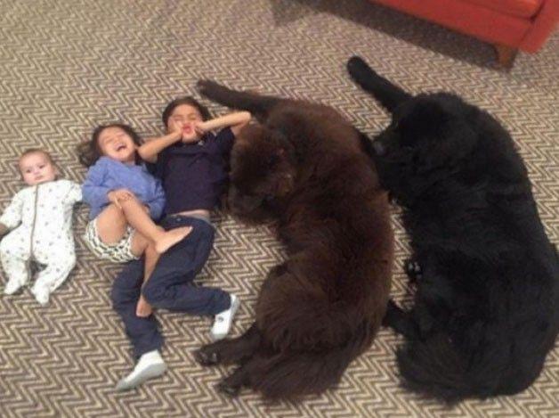 Ez az igazi hűség! Ez az amit egy ember sosem fog felülmúlni,egy kutya hűségét!  A kutyám jön, hogy kitöltse a hűtlen barátok által...