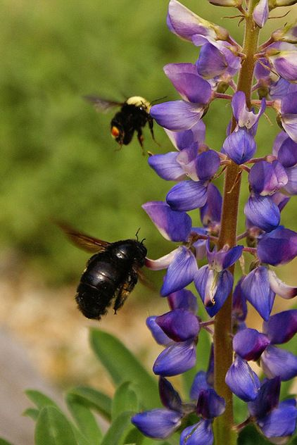 186 best images about california native gardens on pinterest