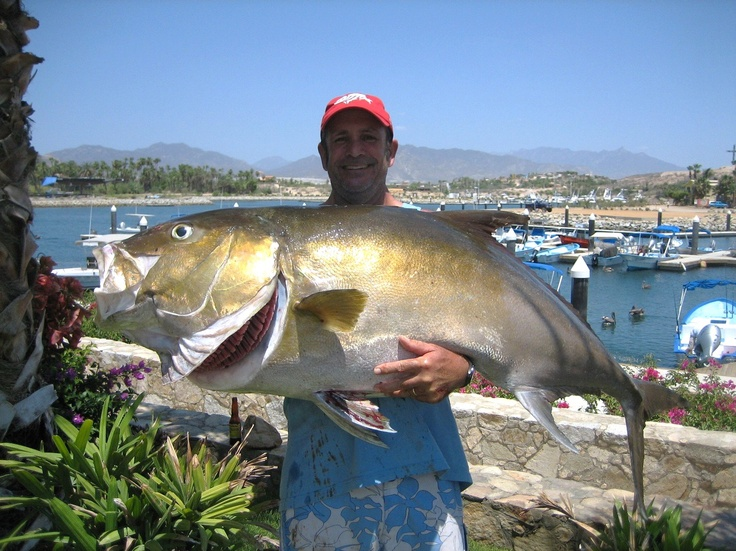 1000 images about cabo mexico on pinterest bahia for San jose del cabo fishing report