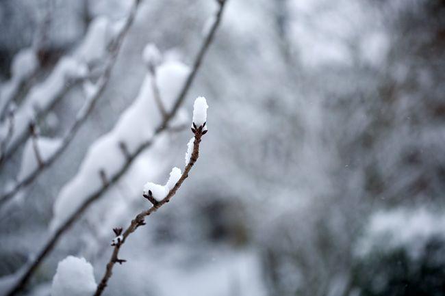 snow « London