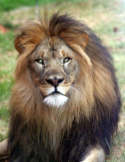 В бердянском зоопарке «Сафари» живут 130 экзотических животных, более 30 их видов, входят в Красную книгу