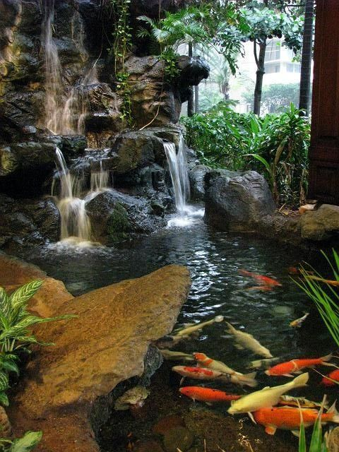 Koi garden pond with waterfall.