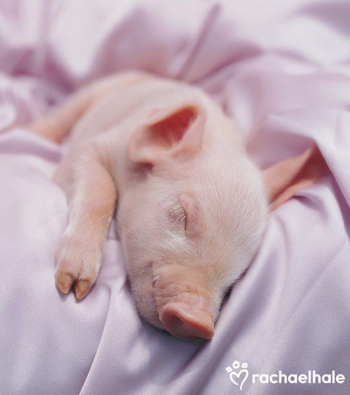 чтобы свинка проснулась фото осетинского пирога домашних