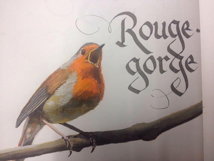 Rouge Gorge, Robin, Roodborstje. By Rogier Bot