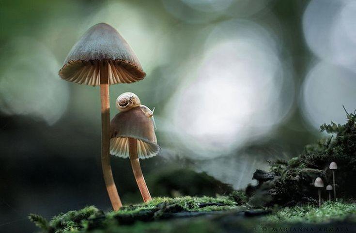 31 μαγικές φωτογραφίες μανιταριών που θα σας αφήσουν άφωνους!
