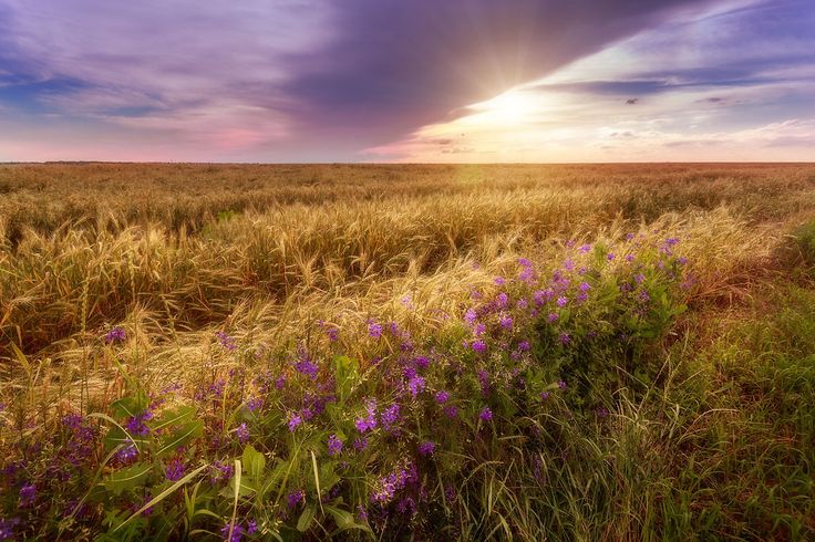 Sunset with flowers by Mark Sivak on 500px