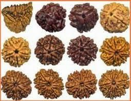 """#Rudraksha word is related to #Hindu Religion. Rudraksha tree and seed both are called Rudraksha. In Sanskrit Rudraksham means Rudraksha fruit as well as Rudraksha tree. Rudraksha tree grows on mountains  http://www.onlineremedies.in/2013/10/rudraksh-rudraksha-beads-1-to-21-mukhi-benefits-mantra-power-faces-meaning-original-nepal-lord-shiva-rosary-mala-japa-hawan.html"