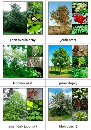 Druhy stromů