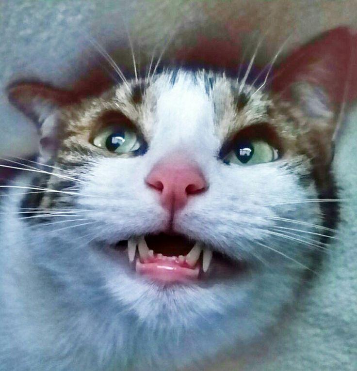 Stephen King's Cat