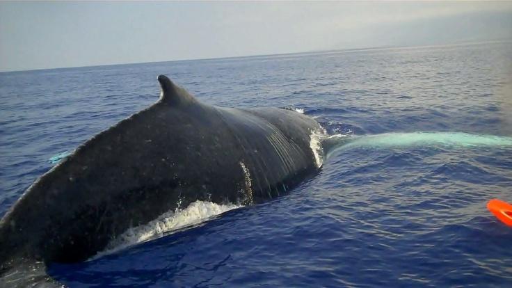 Maui, 2010