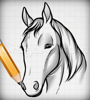 how to draw a donkey face