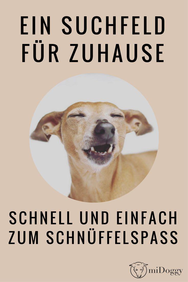 Hund | Schnüffeln | Suchfeld | Auslasten | Ideen