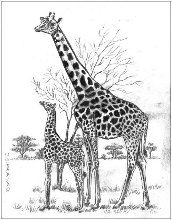 Resultado De Imagen Para Dibujo A Lapiz De Jirafas Sobre Un Mundo Y Planetas Jirafas Dibujos Animales