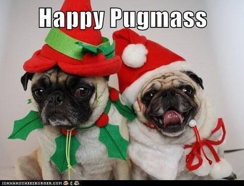 Merry Christmas to all my pug loving friends & Followers!