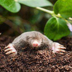 Great How You Can Get Rid of Moles