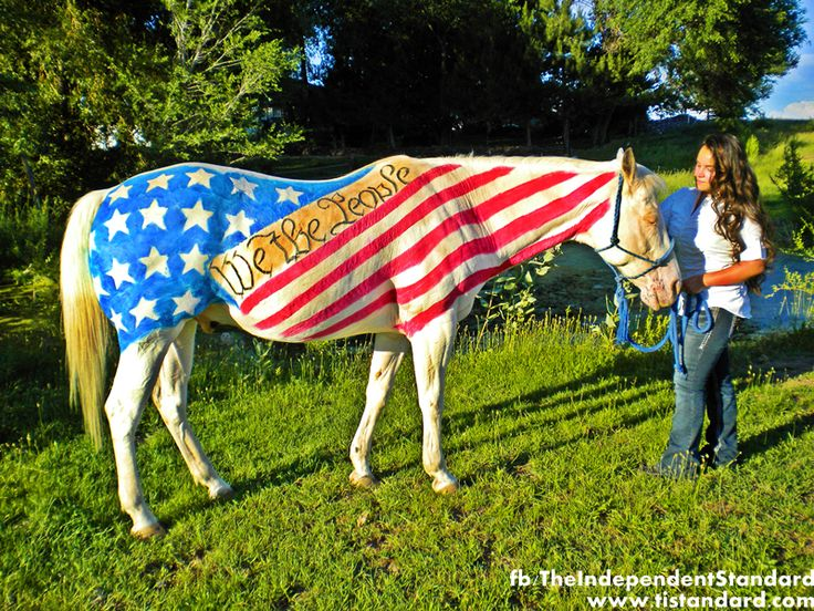fourth of july horse images