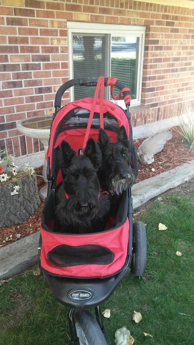 We LOVE our stroller!