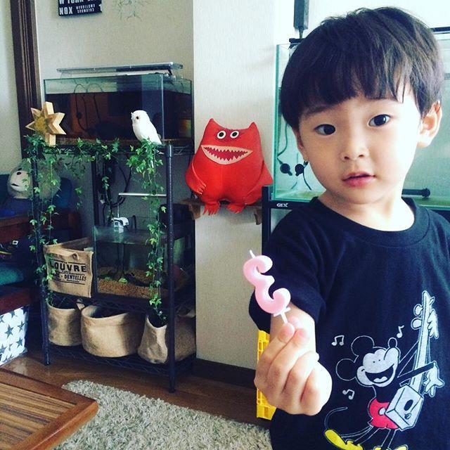 【bob_size】さんのInstagramをピンしています。 《3歳の誕生日を迎えた凜太郎⭐️この後ケーキをグチャグチャにしたのは言うまでもない事実・・ #happybirthday #happyday #three #mickey #mickeymouse #naugamonster #aquarium #owl #green #star #boy #kids #ミッキーマウス #3 #ナウガモンスター #親バカ部 #緑 #水槽 #アクアリウム #熱帯魚 #フクロウ #ミッキー #子供 #キッズ #誕生日🎂 #3歳》