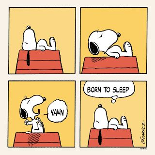 Life With Beagle: Snoopy a beagle? 5 ways to tell