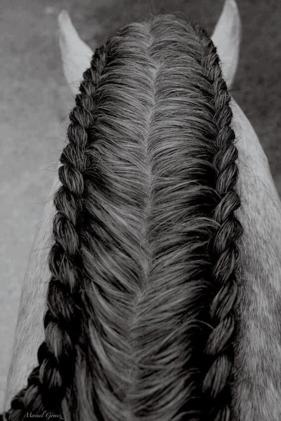 25+ unique Horse hair braiding ideas on Pinterest | Horse ...