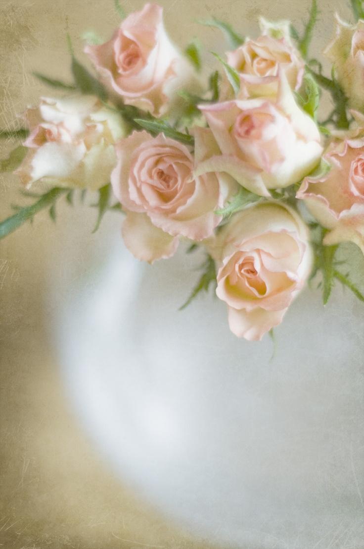 38 best Sarah Gardner images on Pinterest | Blumen, Blüten und ...
