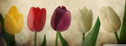 Vintage Tulips Facebook Covers