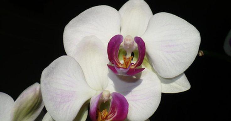 ¿Debo recoger las flores marchitas de mi orquídea?. Orchid.com advierte que existen varios factores que pueden provocar que las flores de las orquídeas se marchiten. Por lo general, es debido a los cambios bruscos de temperatura o a la presencia de gas etílico (originado por frutos maduros o la estufa). Arranca la flor marchita y modifica las condiciones de temperatura para la planta o cámbiala de ...