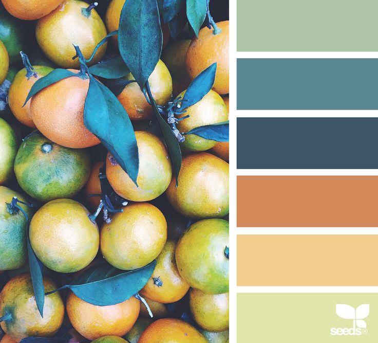 color pick; Orange / Teal / Sage ~ design-seeds