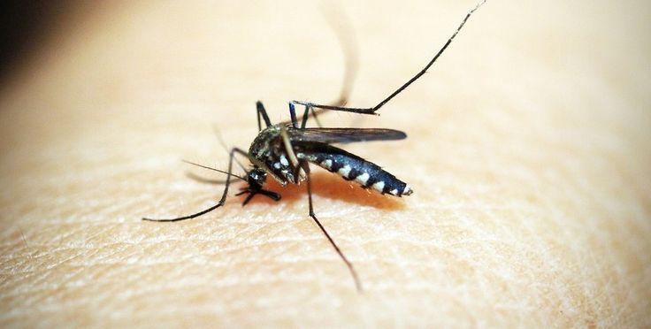 Pułapka na komary - koniec z gryzieniem  Pułapka na komary - koniec z gryzieniem