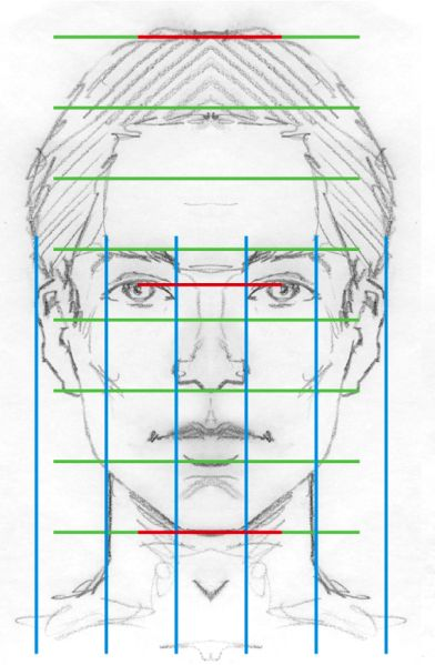 Face proportionDiagram