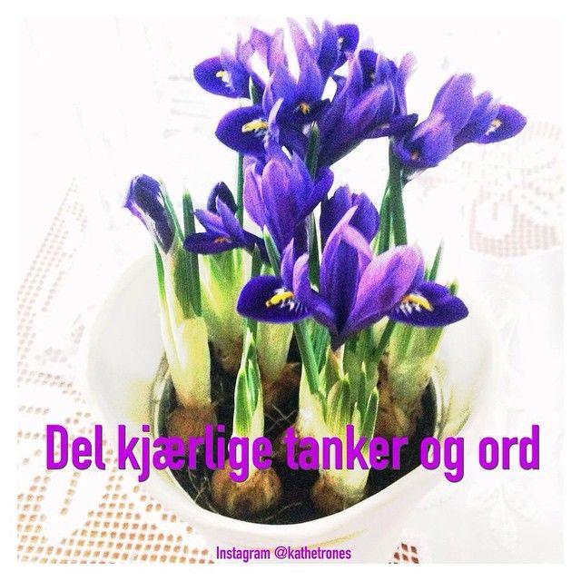 """Share loving thoughts and words  #healing #heart #happy #kjærlighet #belove #blomster #blomstererhealing #flowers #flowersarehealing #everyday #fokus…"""