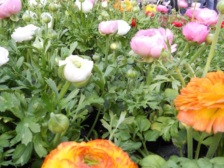 Flower festival in Modena
