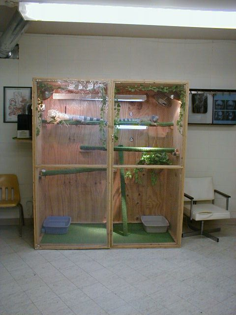 Iguana Cage Pictures