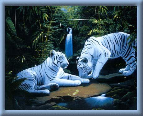 glitter animated star background | Glitter Graphics » Animals » White tigers