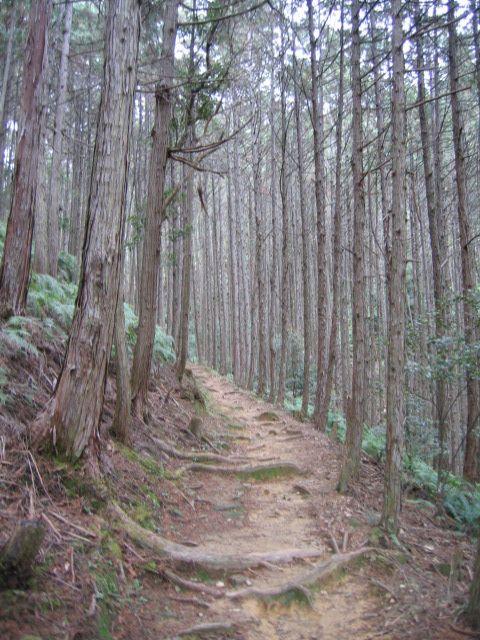 Japan 2007 250 - Kumano Kodō - Wikipedia