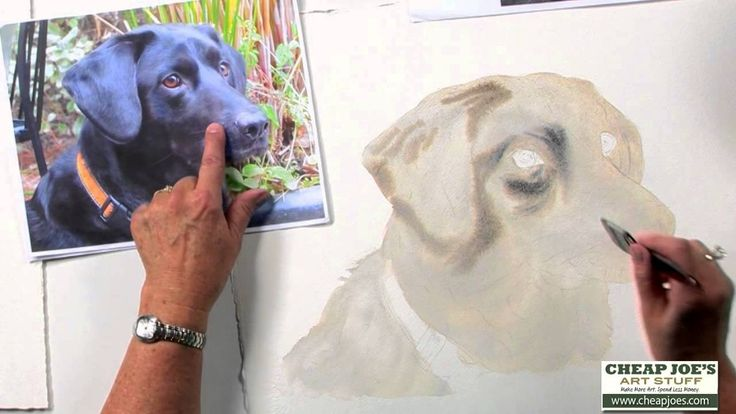 How to Paint a Dog's Face with Watercolor Artist Nancy Couick-Part 1