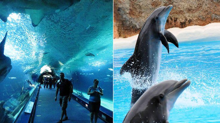 Islands habitats and red sea on pinterest for Aquarium valencia precio