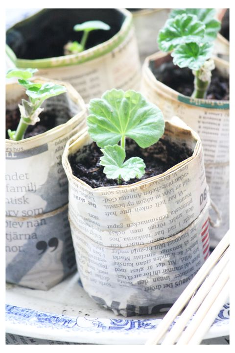 genius biodegradable seedling holders. I think I have already pinned this, but just in case am doing it again, because I know I will use it this spring.