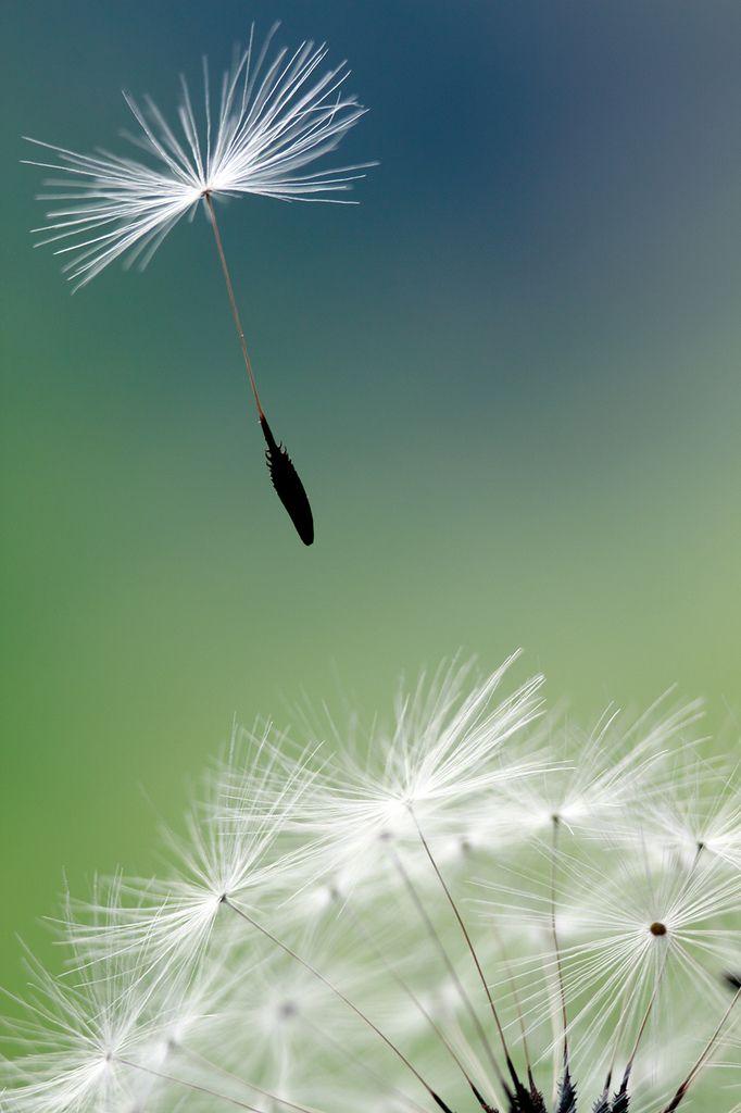 """""""Me gusta el viento. No sé por qué, pero cuando camino contra el viento, parece que me borra cosas. Quiero decir: cosas que quiero borrar."""" — Primavera con una esquina rota. Mario Benedetti."""