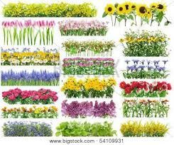 Image result for summer flowers for borders